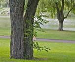 Avion - grands espaces et patrimoine naturel - Le parc de la Glissoire