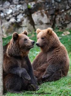 Les ours