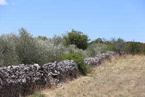 La Nature à l'abri des pierres