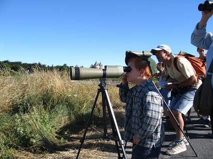 Sorties Ornithologiques avec David Lédan à Sarzeau