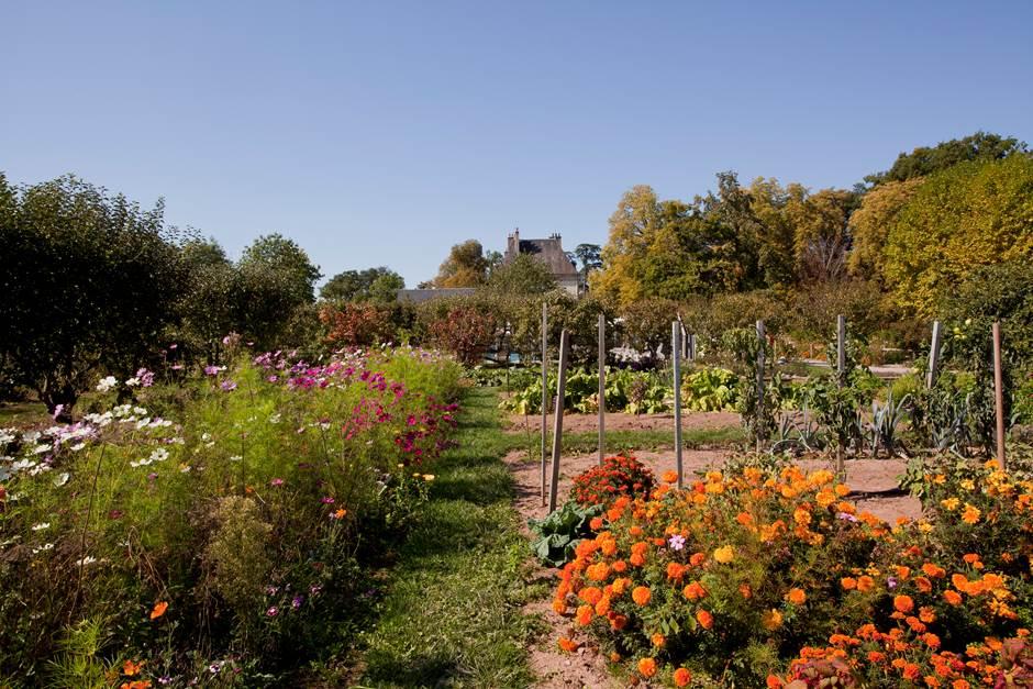 Château d'Ygrande - jardin potager