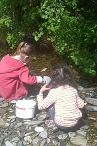 Le petit peuple de l'eau - Les Plantiers