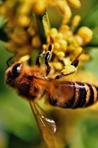 Avec des produits recyclés, je fabrique une abeille