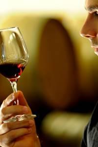 Balade vigne et vin à Tavel