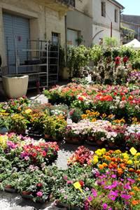 Festival des Fleurs et des plantes à Sommières