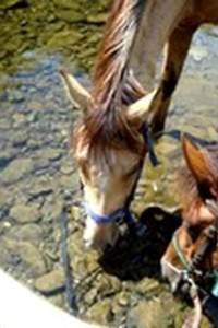 Cévennes équitation de loisirs