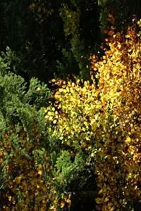 Quand la forêt révèle ses couleurs…