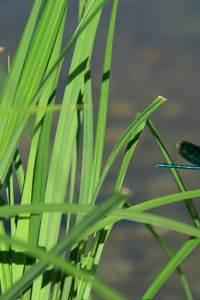 Des insectes par milliers