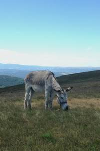 La Caravane des ânes