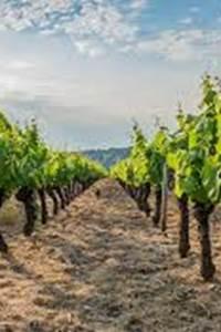 Passion vigneron au Domaine Castel Oualou