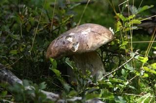 Week-end Découverte des champignons