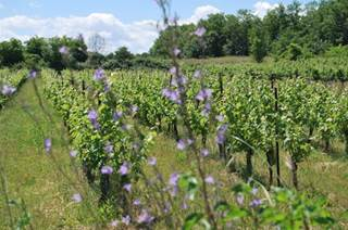 Domaine des Vignes Rouges