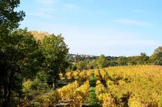 Cave des vignerons de Quissac