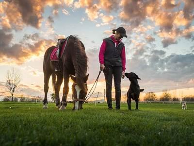 """Formation chiens guides - Les Quatre """"A"""""""