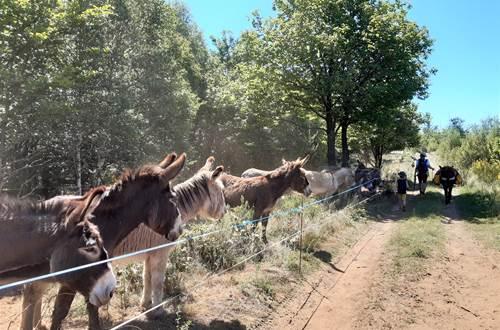 asinerie-badjane-le troupeau-des-anes-regarde-passer-les-randonneurs ©
