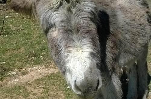 Causses et Lamas 6 ©
