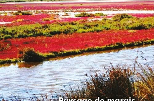 9 types de paysages en Camargue, ici celui de marais, sansouire et salicorne rouge ©