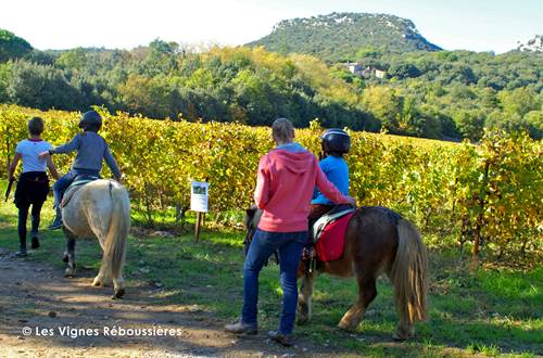 Vignes Réboussières © Vignes Réboussières