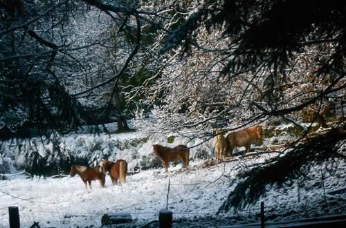 Dans la neige ©