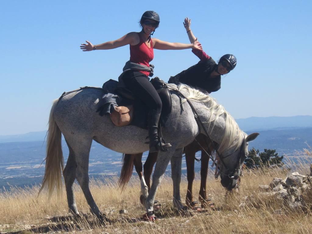 cheval enjeu